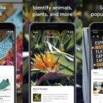 Aplikasi Pencarian Gambar Terbalik Terbaik untuk iPhone dan Android - Google Lens