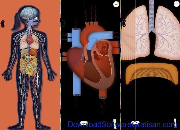 Game Edukasi Online Terbaik untuk Anak - The Human Body